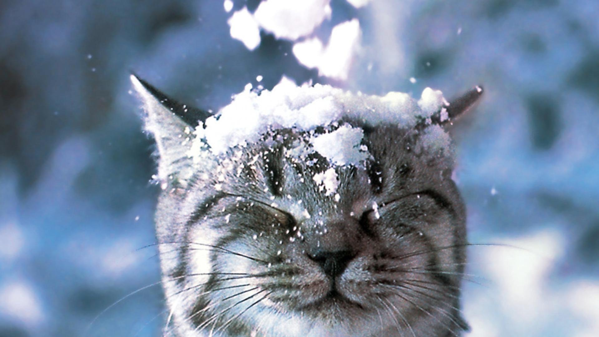 """Képtalálat a következőre: """"winter  cats"""""""